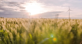 Agriculture Windmill Sunlight Landscape Nature Wheat Field Growth Footage Renewable Energy Sky