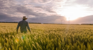 Farmer Walking Wheat Field Windmill Sunlight Agriculture Landscape Nature Growth Drone Footage Man Sky Renewable Energy
