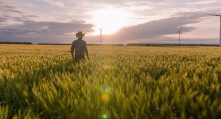 Farmer Agricultural Field Ambitious Windmill Sunlight Wheat Farm Landscape Nature Agriculture Growth Footage Man Sky Renewable Energy
