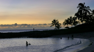 Beach Silhouette People Water Footage Nature Sea Sunset Sky Palm Trees Travel Vacation Scenery Island Tourism Hawaii Timelapse