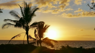 Silhouette Palm Tree Nature Sunset Beach Sea Tropical Island Sky Travel Footage Beautiful Tourism Scenic Hawaii Peaceful Destination Scenery Orange