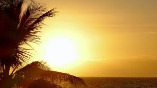 Orange Sky Silhouette Palm Tree Nature Sunset Beach Sea Tropical Island Travel Footage Beautiful Tourism Scenic Hawaii Peaceful Destination Scenery