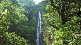 Footage Waterfall Forest Hawaii Green Lush Foliage Nature Water Travel Beautiful Island Rainforest Environment Motion Tourism  Long Exposure