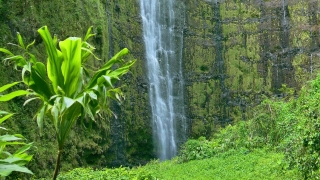 Waterfall Hawaii Green Forest Footage Nature Water Travel Beautiful Island Rainforest Tourism Environment Motion 4K Long Exposure