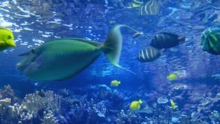 Fish Swimming Footage Underwater Nature Beauty Aquarium Animal Water Tropical Aquatic Sea Blue Wildlife Marine Coral Fishtank Surface