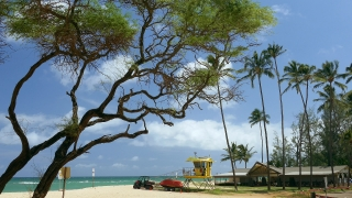 Beach Tree Lifeguard Hut Beautiful Sky Nature Idyllic Footage Sea Island Vacation Travel Tourism Thailand Peaceful Hawaii Boat