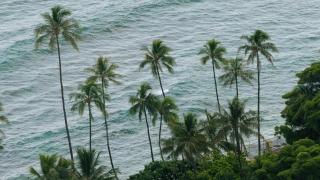 Palm Trees Nature Beach Water Coast Travel Island Vacation Sea Tourism Green Beach Tropical Caribbean Storm Scene