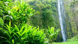 Footage Hawaii Waterfall Green Forest Nature Island Water Travel Rainforest Beautiful Environment Tourism Long Exposure Motion 4K