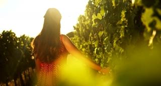 Beautiful Vineyard Sunset Woman Caressing Grape Vine Wine Agriculture Fertility