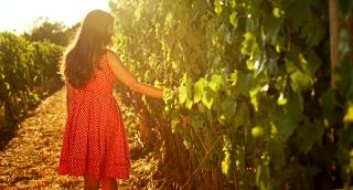 Wine Harvest Fall Autumn Season Sunset Young Woman Walking