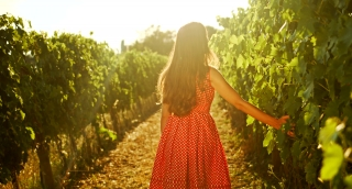 Wine Harvest Season Young Woman Female Grape Vineyard