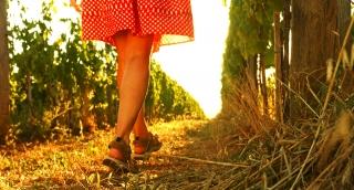 Sunset at  Vineyard Woman Red Dress Walking Wine Grape Harvest