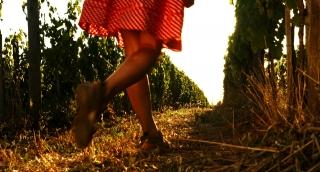 Pretty Woman Walking through Vineyard Grape Harvest Concept