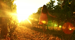 Pretty Young Female Walking Through Vineyard at Sunset Tuscany Harvest
