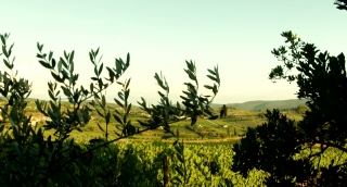 Scenic Agriculture Vineyard Landscape Tuscany Nature Italy Beauty