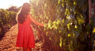 Pretty Young Vintage Dress Woman Walking Vineyard Sunset Colors