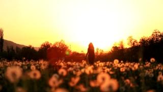 Beautiful Female Model Pink Dress Passing Dandelion Field Sunset