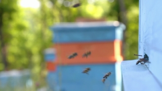 Busy Summer Bees Returning to Apiary Nature Background HD