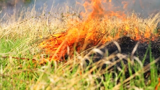 Forest Fire on Summer Field Red and Orange Flames Danger Nature