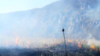 Forest Fire Devastation due to Climate Change Heat Haze Nature