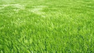 Green Orange Wheat Autumn Field Waves Moved Summer Wind Crane