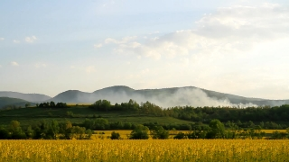 Beautiful Foggy Hills and Yellow Flower Field Spring Nature