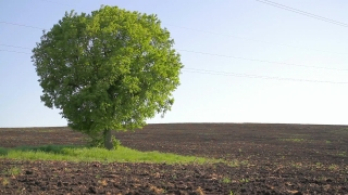 Tree of hope Agriculture Environement Concept HD