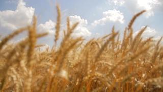 Summer Nature Wheat Field Golden Grain Organic Bread Food