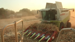 Harvesters Harvesting Corn Field Agriculture Food Concept