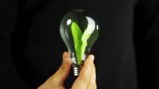 Hand Holding Green Plant inside Bulb Ecology