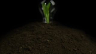 Green Plant Light Bulb Glowing Energy Concept HD