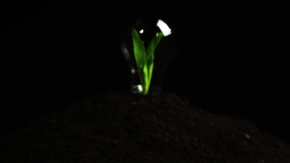 Sprout inside Light Bulb Green Energy Concept
