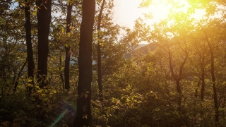 Drone Footage Of Trees In Forest During Autumn Season Beech Nature Branch Magic Light Morning Wilderness Foliage Scenery Trunk