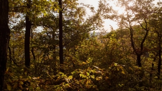 Scenic View Of Trees In Forest During Autumn Season Foliage Nature Beautiful Travel Drone Branch Plant Environment Beech Light