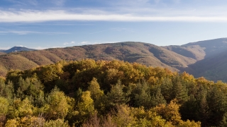 Drone Footage Of Trees And Mountains During Autumn Season Nature Forest Countryside Landscape Scenic Sky Journey Road Sunny