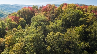 Drone Flying Over Autumn Trees On Sunny Day Season Mountain Nature Beautiful Forest Aerial 4K Foliage Environment Village Colorful