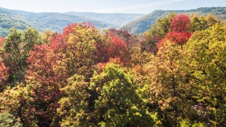 Scenic View Of Autumn Trees And Mountains On Sunny Day Season Forest 4K Aerial Colorful Canyon Wilderness Fall Nature Region
