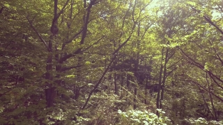 Drone Footage Of Green Forest Trees Nature Landscape Summer Scenic Wilderness River Foliage Beautiful Magic Europe Journey Sunlight