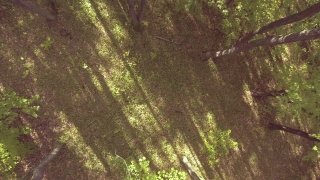 Aerial Shot Of Trees In Forest Nature Green Landscape Drone Scenic River Europe Foliage Beech Pine Branch Wilderness Sunlight
