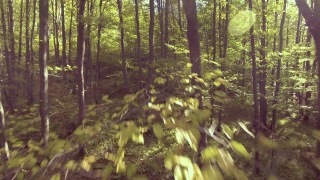 Drone Flying Through The Trees In Forest Branch Nature Landscape Scenic Wilderness River Europe Environment Aerial Sunlight Travel Moss Leaf