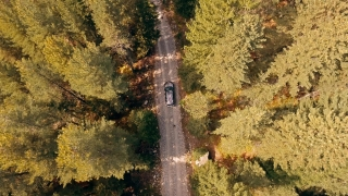 Drone Footage Of Car Driving Through Forest Road Aerial Travel Countryside Tree Slow Motion Autumn Nature Pov Sunlight Scenic