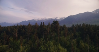 Epic Aerial Flight Over Mist Forrest Sunset Beautiful Fall Season Forrest
