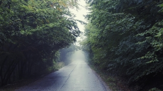 Flying Through Fog Mountain Path With Trees Loneliness Depression Search For Truth Enlightment Slow Motion Drone