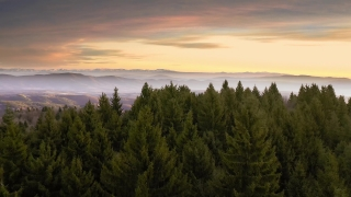 Drone Aerial Over Mountain Winter Pines Early Morning Mist Beautiful Colors Sky Christmass Holiday Cinematic Flight 4k
