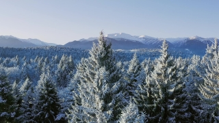 Mountain Trees Landscape Winter Misty Alpine Landscape At Sunset Sunrise Holiday Travel And Tourism Frosty Pines Vibrant Colors Aerial 4k