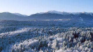 Mountain Frosty Winter Trees Misty Alpine Landscape Golden Hour Winter Vacation Snowy Pines Vibrant Colors Aerial 4k