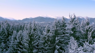 Mountain Frosty Winter Trees Beautiful Nature At Sunset Sunrise Holiday Travel And Tourism Frosty Pines Vibrant Colors Aerial 4k