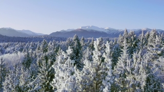 Mountain Trees Landscape Winter Alpine Landscape Early Morning Sunrise Holiday Travel And Tourism Frosty Tree Tops Vibrant Colors Aerial 4k