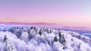 Snow Covered Winter Trees Misty Alpine Landscape Golden Hour Mountain Tops Winter Vacation Frosty Pines Vibrant Colors Aerial 4k