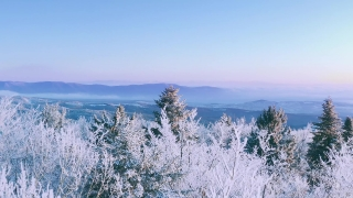 Snow Covered Winter Trees Misty Alpine Landscape Golden Hour Mountain Tops Holiday Travel And Tourism Snowy Pines Vibrant Colors Aerial 4k